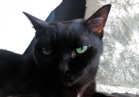 黒猫姉さん