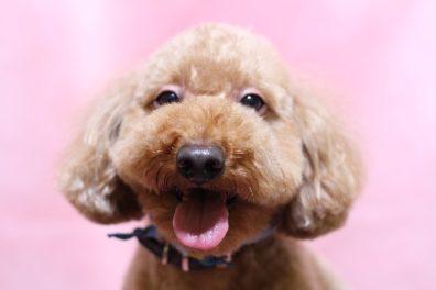 笑いながら待つ犬