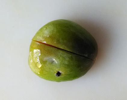 plum04