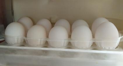 eggpack06